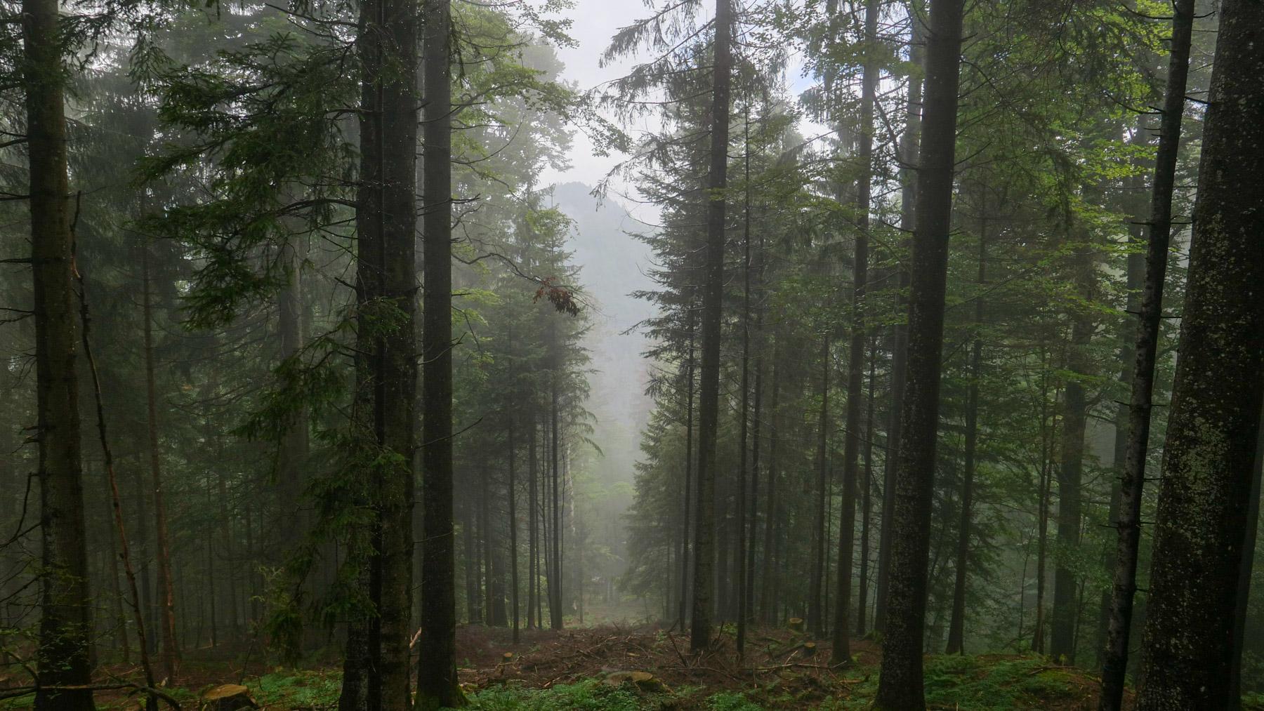 07 Gmeinwald