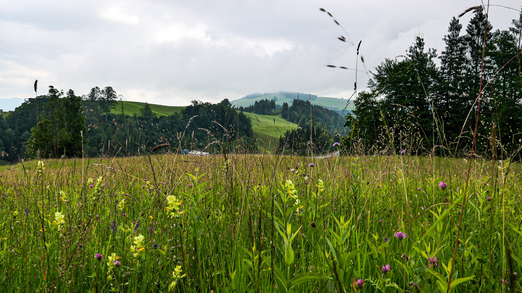 02b Brunnisboden