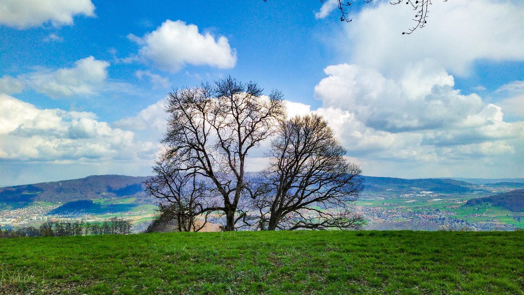 Hintergrund: Sännebergweid (12)