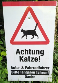06 Achtung Katze