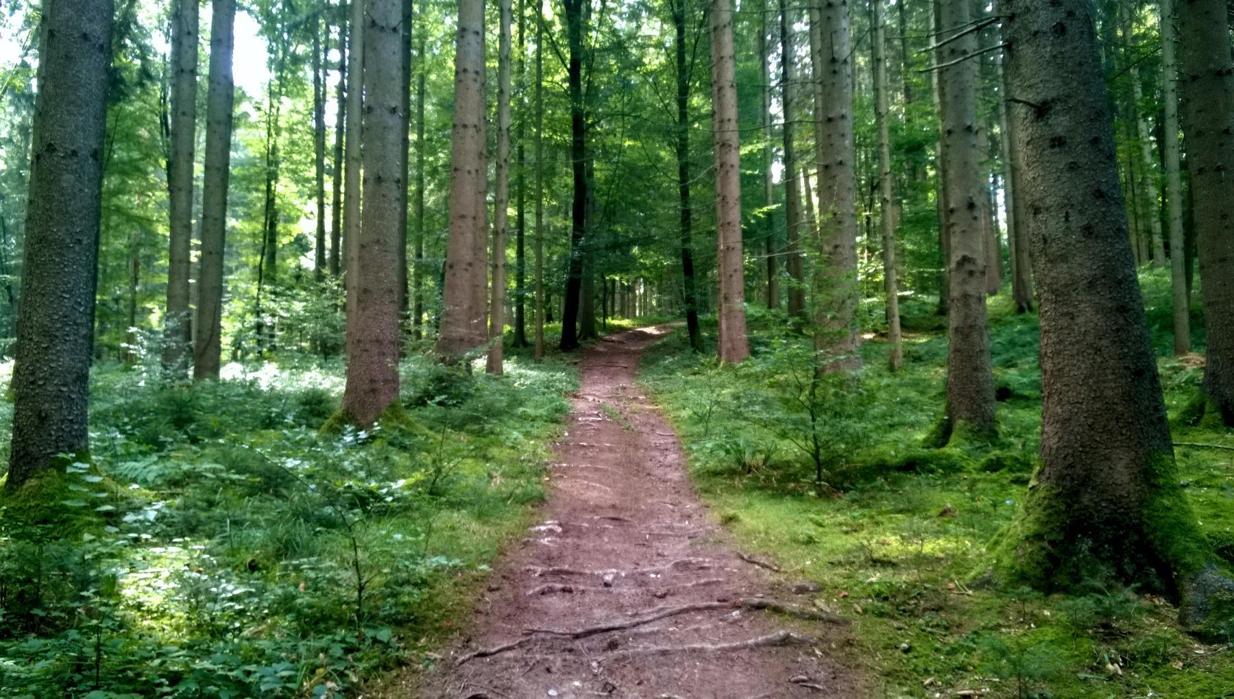 11a Geissberg oberhalb Wisbachtobel