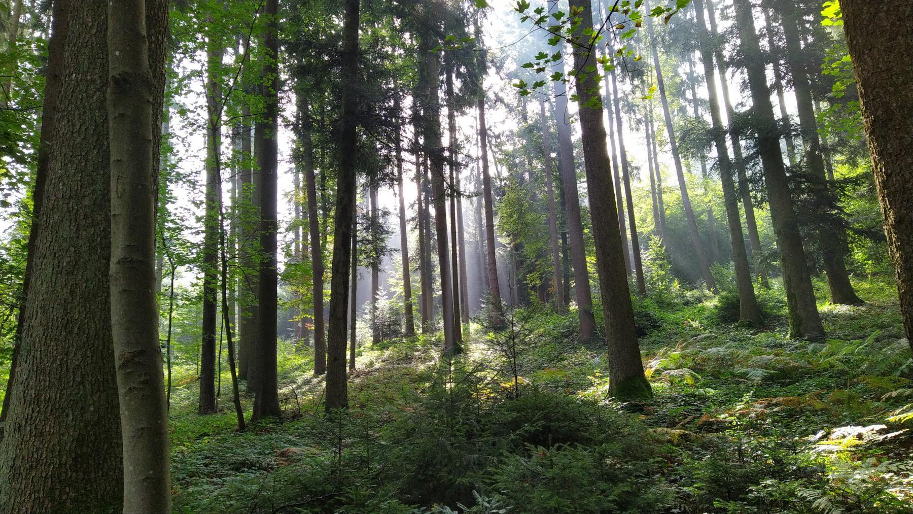 17b Möösli Wald