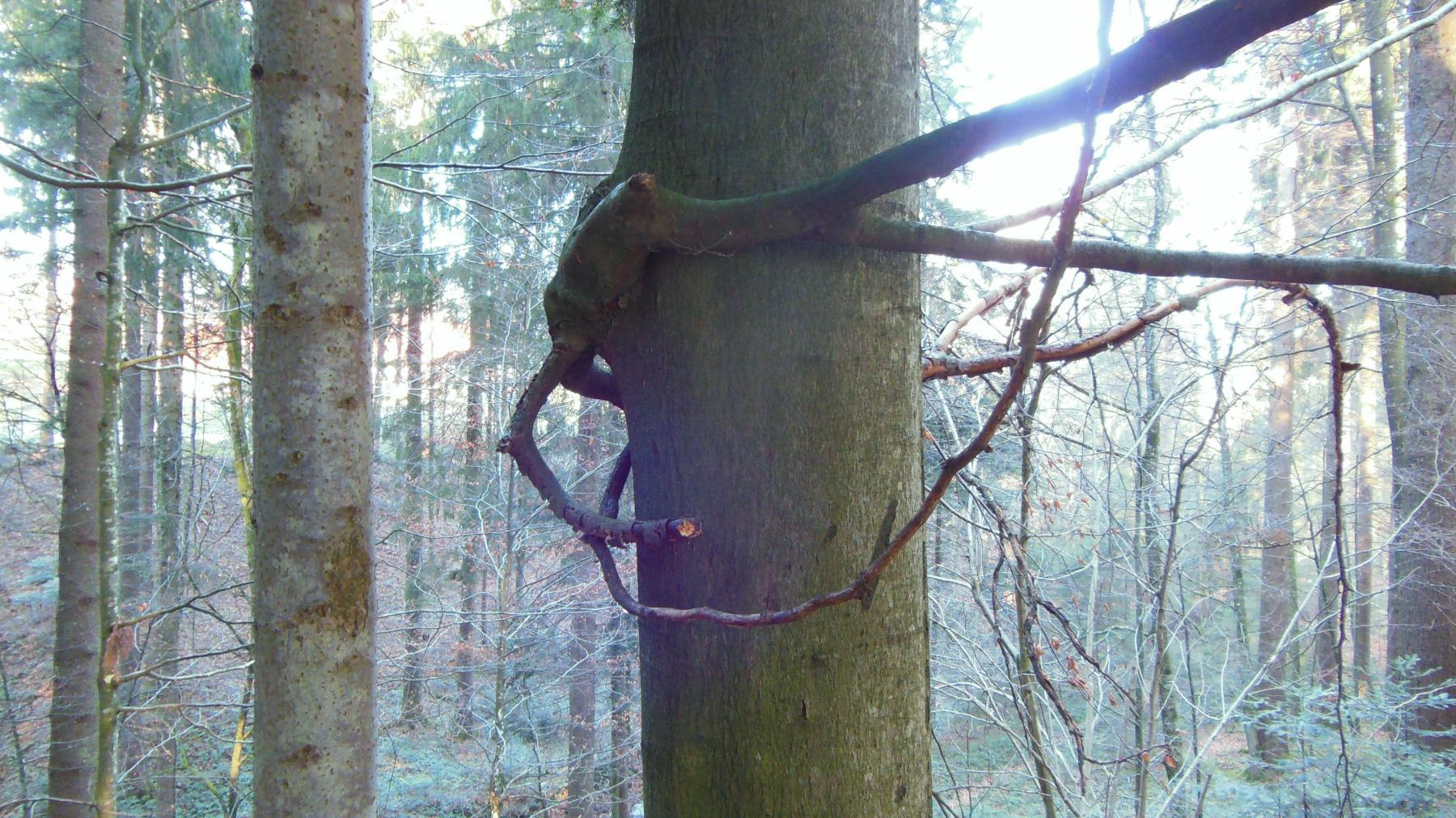 20b Wässerholz